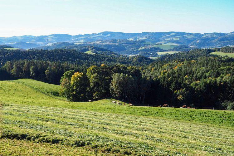 Seitensprung Gerasdorf Announce