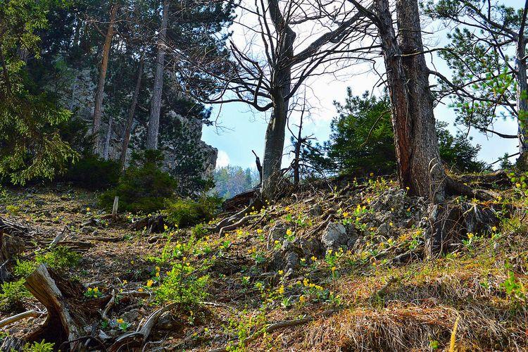 Seitensprung Pulkau Kleinanzeigen